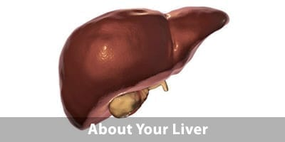 About Your Liver